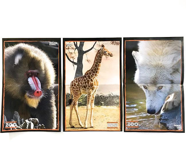 Une-saison-au-zoo_actu-1